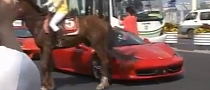 horse-kicks-ferrari-458-in-china-video-45726-2