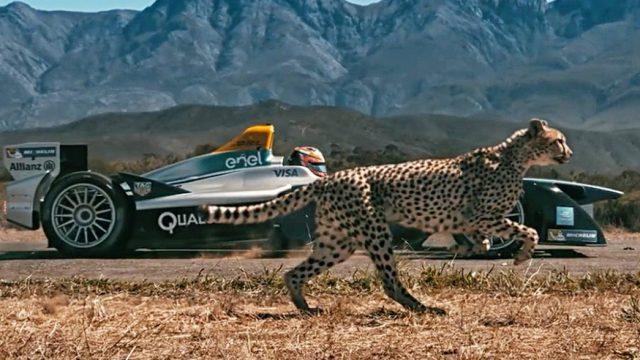 cheetah-formula-e